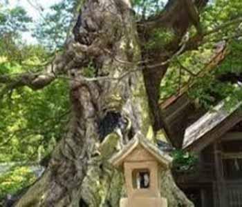 命主社のむくの大木1