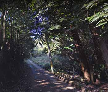 桃尾の滝へ続く山道