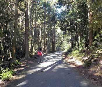 天の岩戸への山道