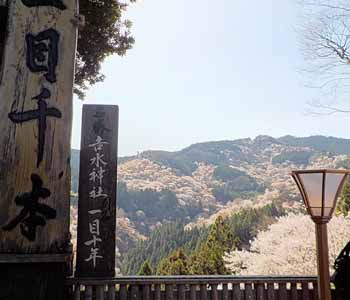 𠮷水神社「一目千本」