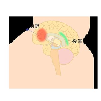 内側前頭前野と後帯状皮質の位置