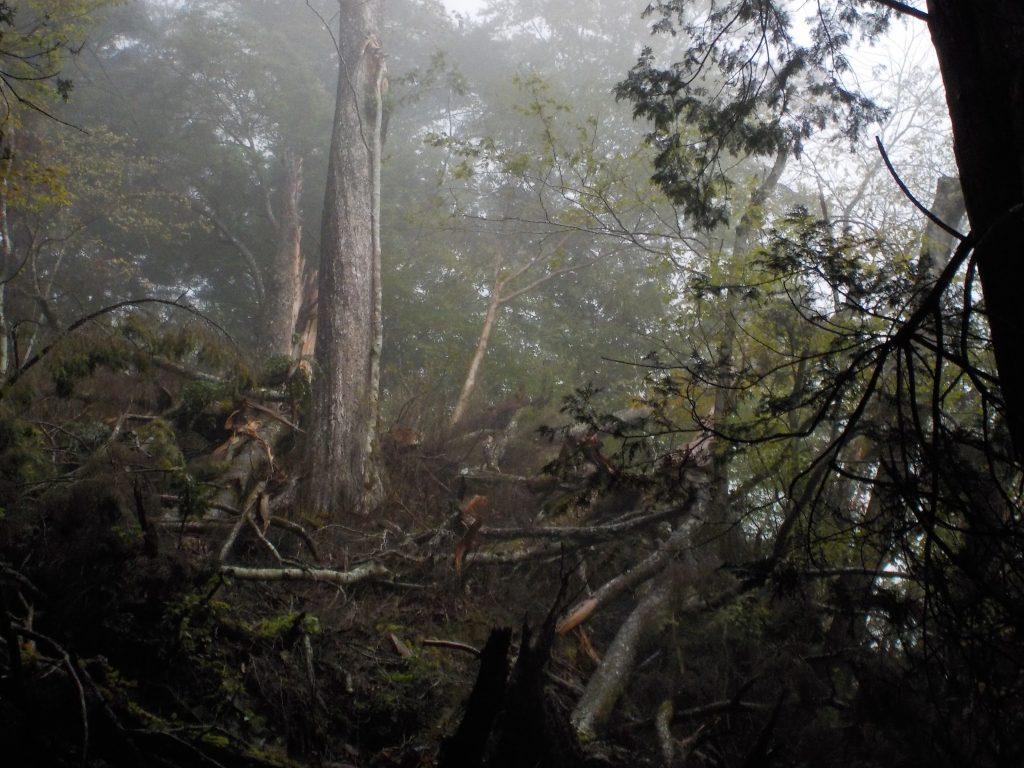 七面山参道、台風の爪痕