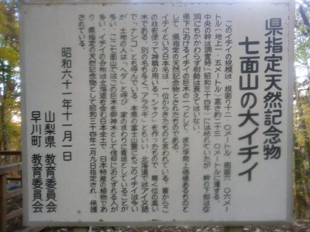 七面山 御神木の説明